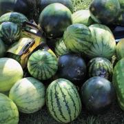 Wassermelonen-Lauf